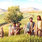 Sai Thợ Ra Gặt Lúa (07.7.2020 – Thứ Ba Tuần 14 Thường Niên)